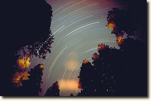 Sequoia NP: Startrails